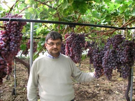 Il costitutore Stefano Somma con la sua varietà apirena Apulia