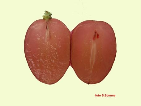 Fiammetta seedless acino in sezione